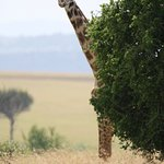 Zdjęcie East Africa Adventure Tours and Safaris - Day Tours