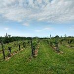 Avondale Sky Winery Foto