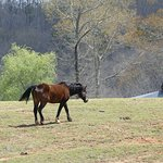 Beautiful Stallion grazing just behind the main building.