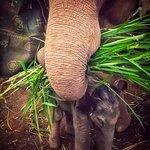 Bilde fra Elephant Jungle Paradise Park
