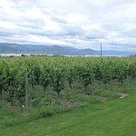 Foto van Red Rooster Winery