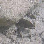 Eel @ Baby Beach