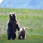 Mother Kodiac bear with her cub