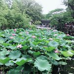 Photo of Humble Administrator's Garden