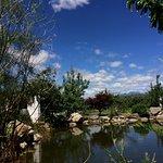 果园中的池塘