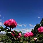 果园中的蔷薇