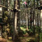 Tree Adventures - Course 8