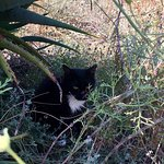 Foto de I Gatti di Su Pallosu