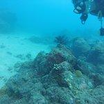 Having fun scuba diving!