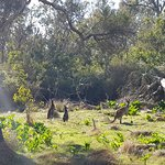 Wetland at Ludlow Tuart Forest