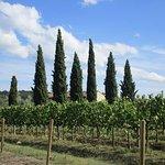 Cypress raws usually leading to historic estates