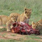 Mabalingwe Nature Reserveの写真