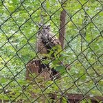 Foto de Carolina Raptor Center