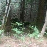 An Sibin Hunting Lodge صورة فوتوغرافية