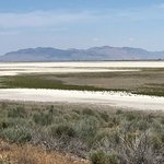 If you are in the Salt Lake area and don't visit Antelope Island State Park, you are missing out