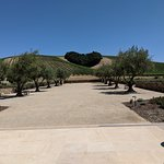 Plan in advance and you can get a tour and tasting IN the Lavender Heart on the hill!
