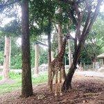 Photo of Chiang Mai Zoo