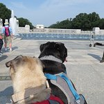 World War II Memorial with the Pups