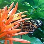 The butterfly exhibit