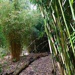 Myddelton House Gardens resmi