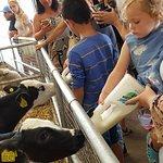 Фотография DairyLand Farm World