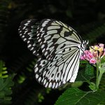 Foto de Butterfly Rainforest