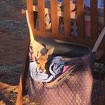 Foto de The Kangaroo Sanctuary