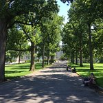 The walk up towards the Library in the Gardens