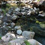 Bild från Terwilliger Hot Springs