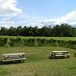 View of the vineyard from the patio.