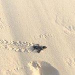 Photo of Eagle Beach