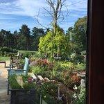 View from breakfast room, birds at bird feeder