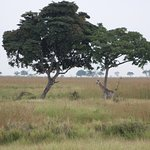 African wild forest experience