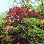 Foto van Japanese Garden