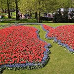 tulip garden blooming with life