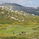 Foto de Plateau de Coscione