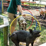 Did you know that HogWILD Education Show is included in your admission?
