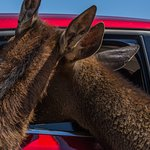 """Our animals love to say """"hi"""" to every car!"""