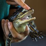 Get up close and personal with several exotic animals in our Education Show!