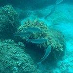 Photo of Lanzarote Non Stop Divers