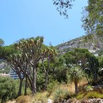 Photo of Gibraltar Botanic Gardens (The Alameda)
