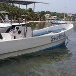 Swordfish Roatan 사진