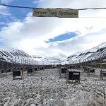 Green Dog Svalbard Image