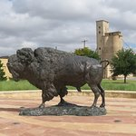 bison in front of the building