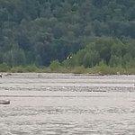 Chilkat Bald Eagle Preserve – fénykép