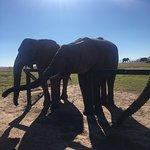 Photo of Knysna Elephant Park