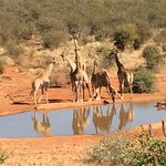Our watering hole right in front of the lodge
