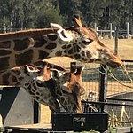 Foto de Mogo Zoo