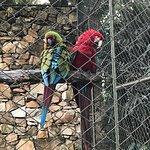 Foto de Zoológico de São Paulo