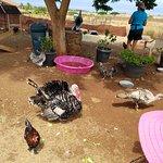Maui Animal Farm